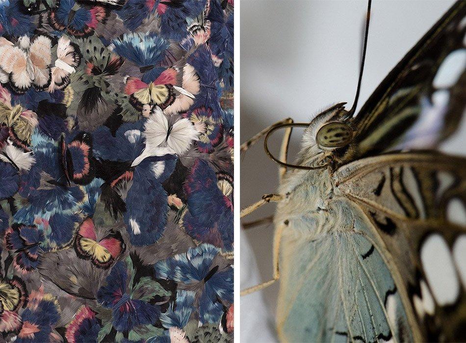 10_Valentino butterflies 14