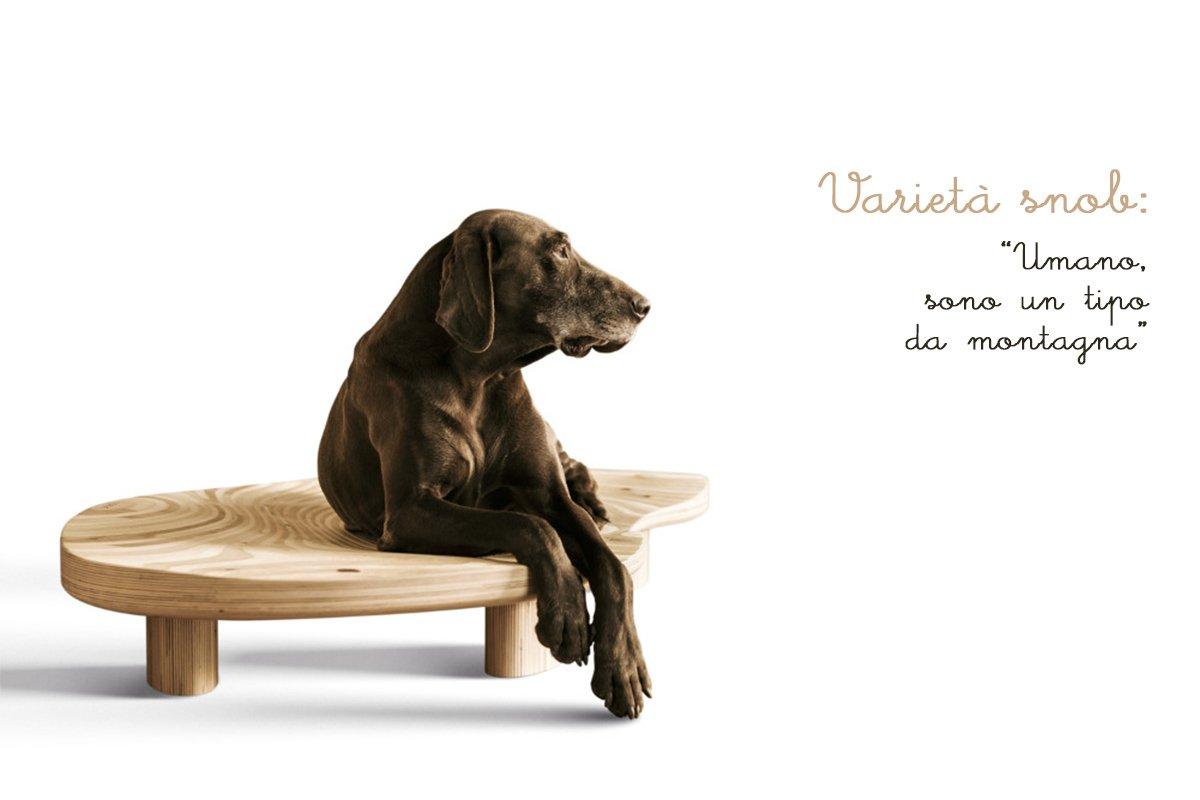 Cucce di design per animali domestici