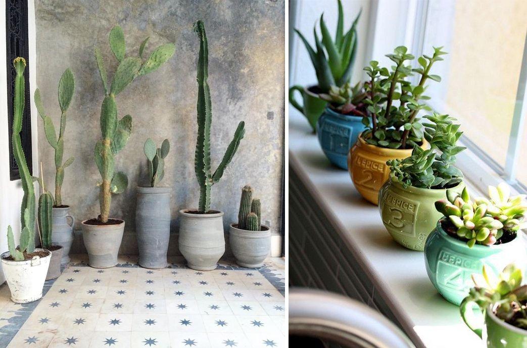 Arredare con le piante quali specie scegliere e come curarle for Solo piante