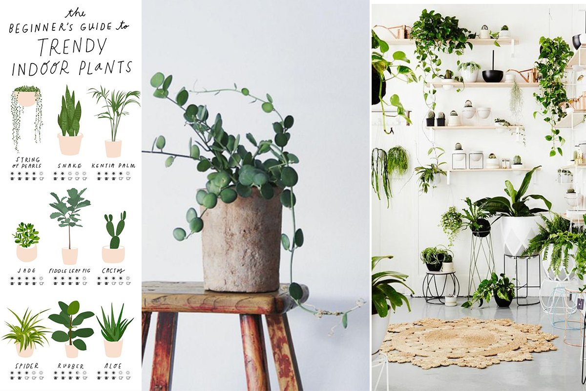 Arredare con le piante quali specie scegliere e come curarle for Arredare casa con le piante